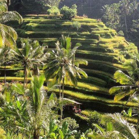 Tegallalang Rice Terrace, Ubud Bali